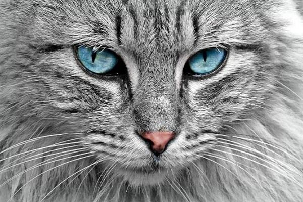 Festa del gatto: curiosità sul felino protagonista di venerdì 17 febbraio 2017