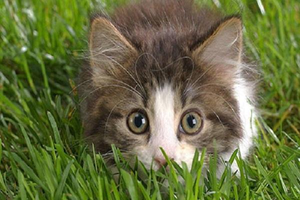 serial killer gatti