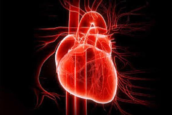 cuore glucidi grassi