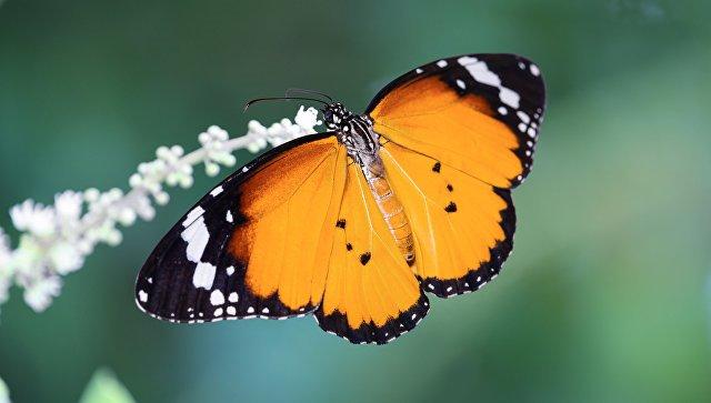 moria insetti volanti rischio piante uccelli Germania Europa