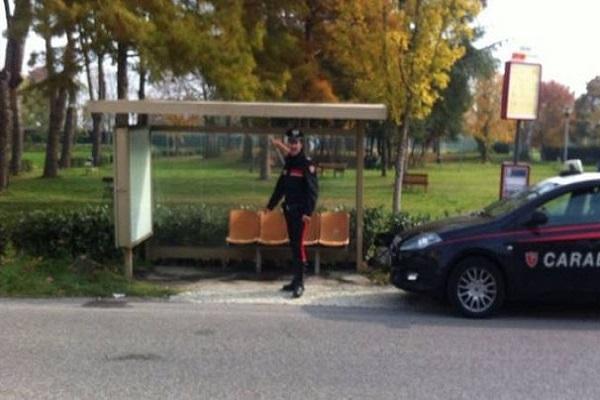 Lupo ucciso a Rimini, indagato un pastore sardo
