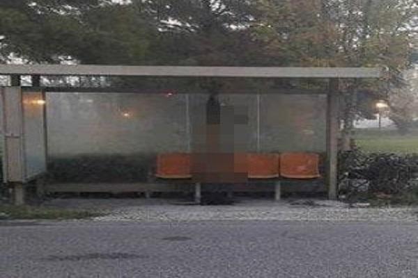 Orrore a Rimini, un lupo è stato ucciso e appeso alla fermata dell'autobus