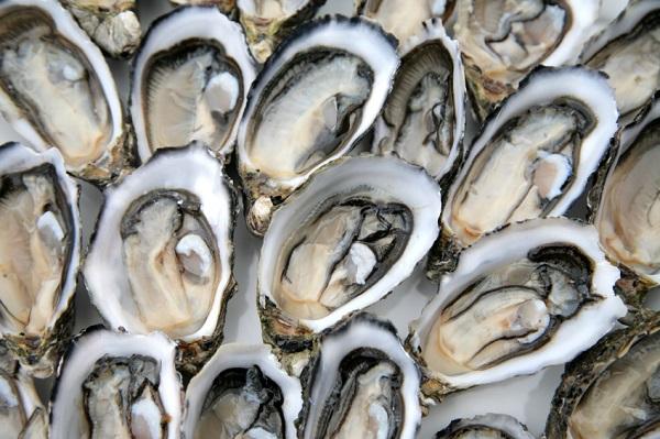 Ritirate ostriche per rischio chimico: pericolo biotossine