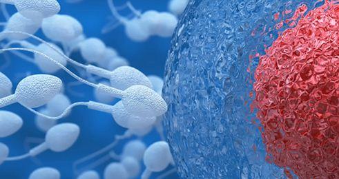 Primi ovociti umani coltivati in laboratorio