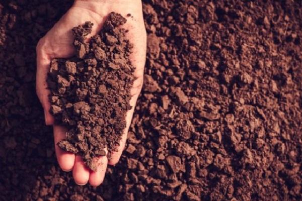 Progetto Geneo rileva arsenico, berillio e vanadio nella terra del Salento