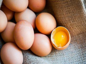 Salmonella nella uova, 22 persone intossicate