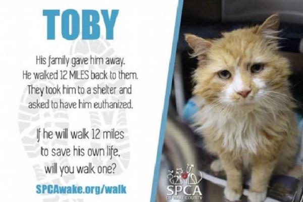 Torna a casa gatto Toby, 20 km per raggiungere la sua famiglia