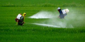 Glifosato in agricoltura: è cancerogeno, ecco perché
