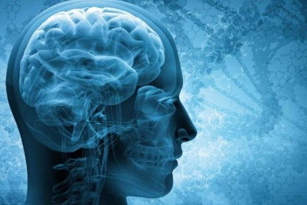 La sinapsina 3 cos'è?