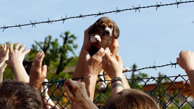 vivisezione test beagle