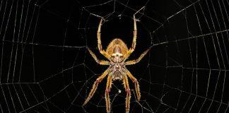 ragno insetti