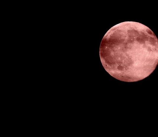 luna-rosa-2019-phlox-aprile